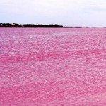 Чудеса природы.  Розовое озеро Хиллер в Австралии CVAVR AVR CodeVision cvavr.ru.