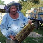 Пчелиный двор Александровское
